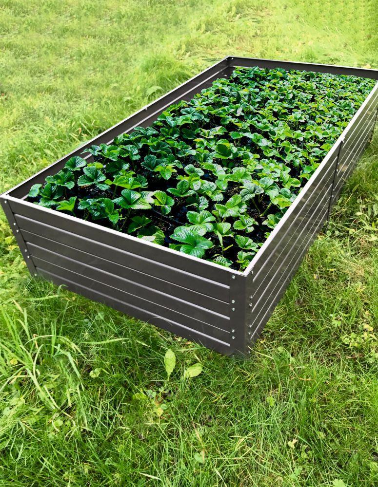 Hochbeet 01 verzinkt mit Pulverbeschichtung - Abmessungen: 150 x 75 cm (L x B)
